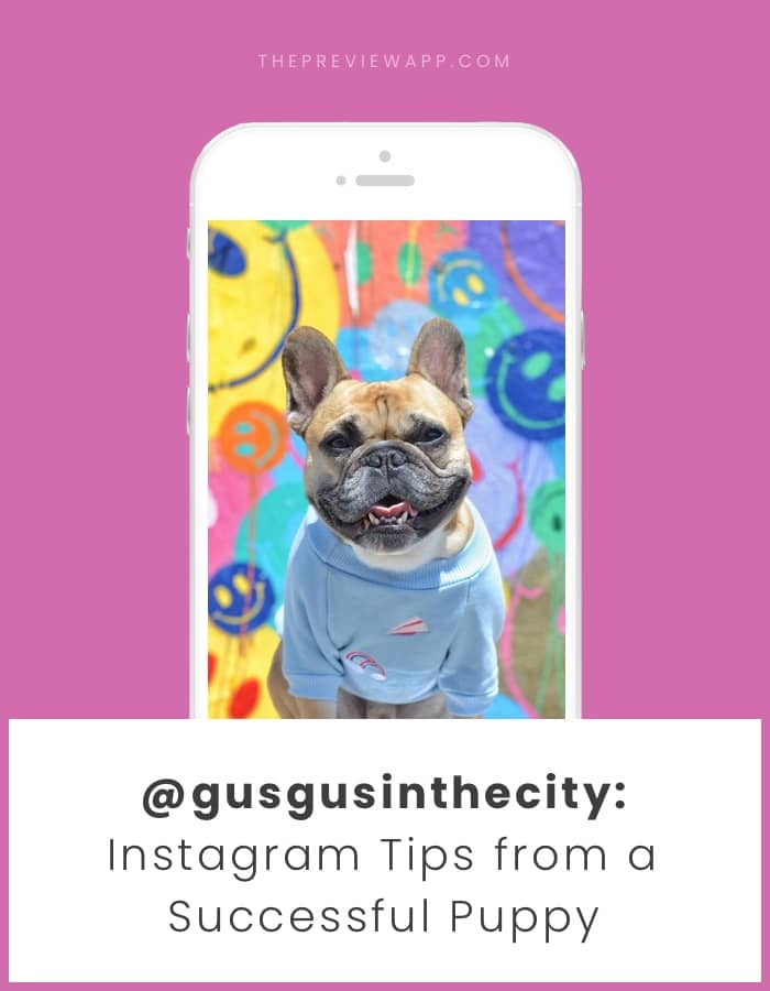 Instagram tips for dog accounts with @gusgusinthecity